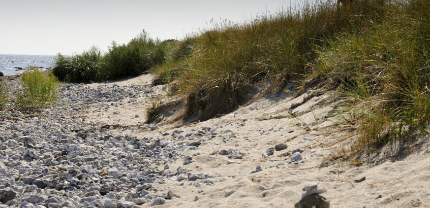 Erosion vid Skånes kust. Beddinge 2012.