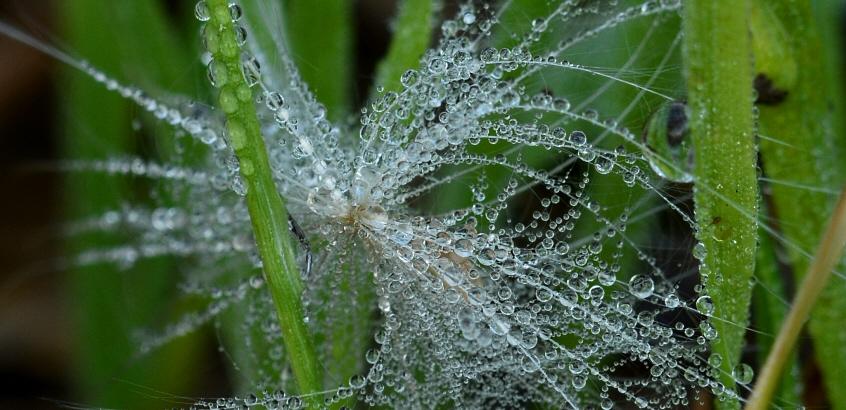 Vattendroppar som bildar ett nätverk på en växt.