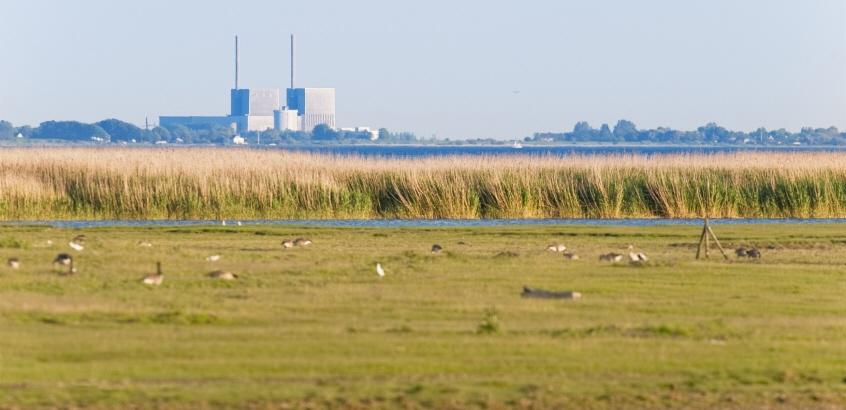 Fält med fåglar i förgrunden, vatten och industri i bakgrunden.